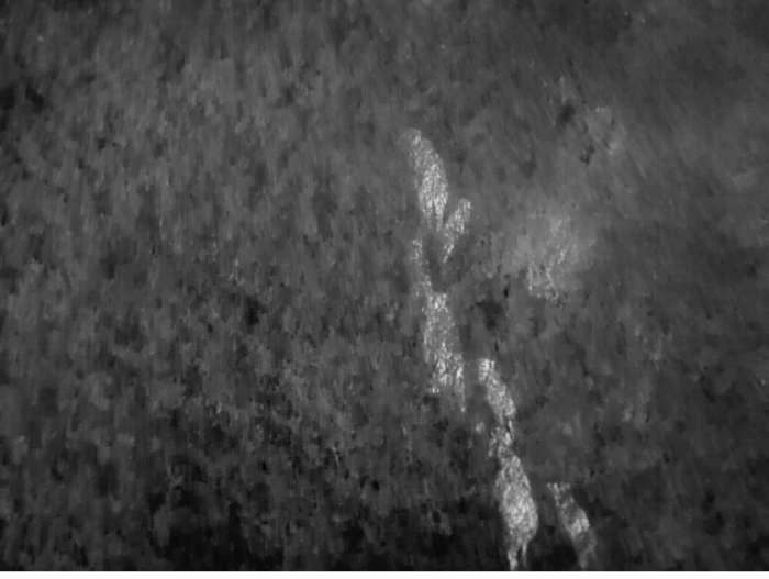 DJI Advanced Drohne mit Wärmebildkamera für Jagd und Kitrzettung